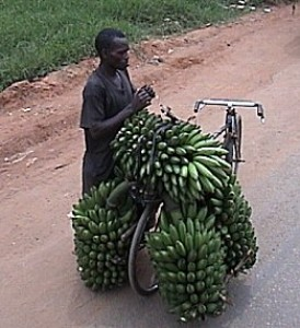 Banana Hauling on a Bicycle