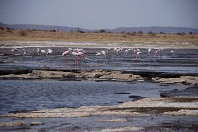 Magadi is spectacular for bird viewing
