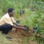 Frederick Msiska at his macademia tree nursery.